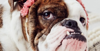 Change Your Dog's Diet and Save Money On Vet Bills