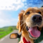 Great Gift Ideas for Pet Lovers