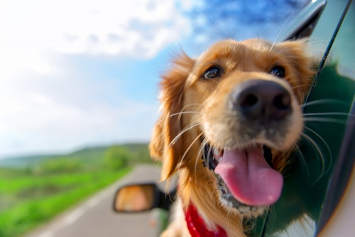 Tips for Taking Your Dog on Vacation