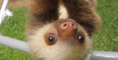 Travel Deal: Rub Elbows With Sloths in Panama