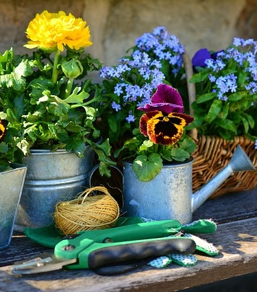 Improving The Look Of Your Garden: The Complete Guide